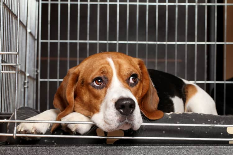 How to soundproof a dog crate or kennel.