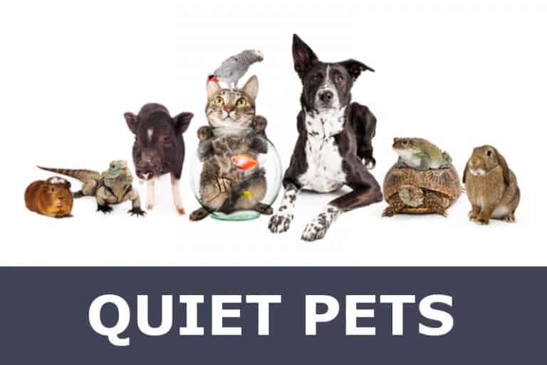Quiet household pets (dogs, cats, fish, lizards, etc.).