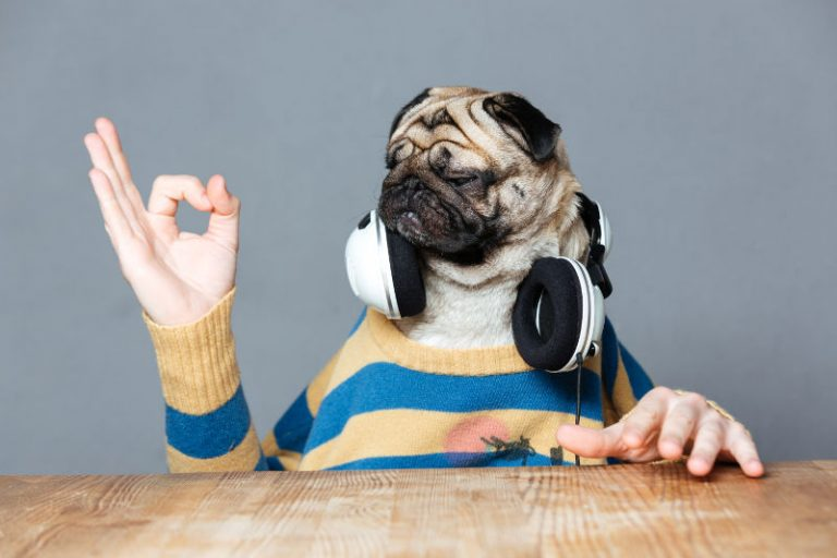 Best noise-canceling headphones and earmuffs for dogs and other pets.