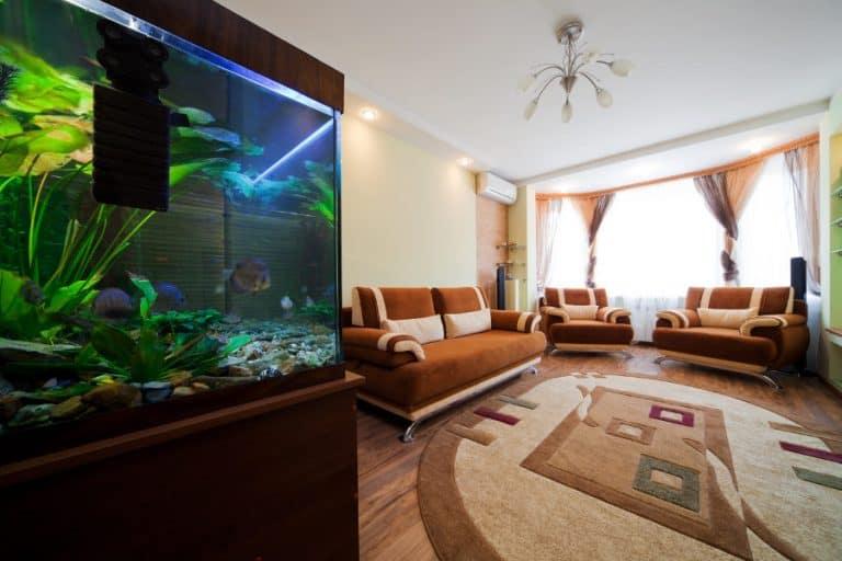 Aquarium with a quiet filter in a living room.