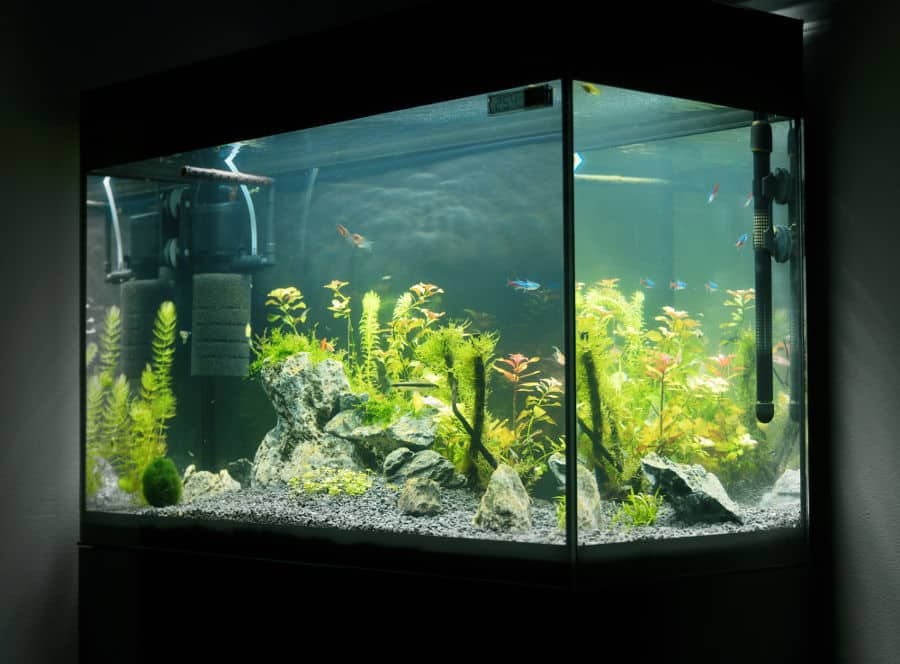 What is the best quiet fish tank filter.