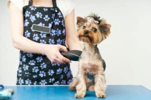 Best quiet clippers that won't disturb your dog.