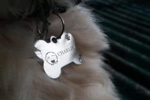 The best silent dog tags that won't make noise while your dog is running around.