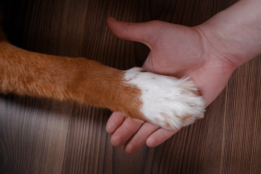 Trim your dogs nails with a quiet nail grinder.